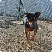 Adopt A Pet :: Mia - Meridian, ID