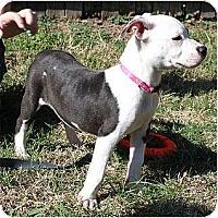 Adopt A Pet :: Macy - Rowlett, TX