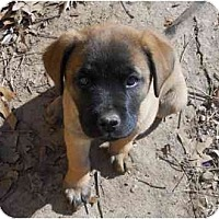 Adopt A Pet :: Moonpie - Cumming, GA