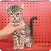 Adopt A Pet :: Jazmine - Riverside, RI