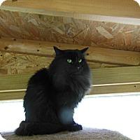 Adopt A Pet :: Meeko - N. Berwick, ME