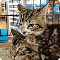 Adopt A Pet :: Clyde - Walla Walla, WA