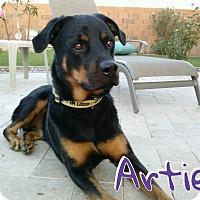 Adopt A Pet :: Artie - Gilbert, AZ