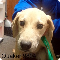 Adopt A Pet :: Quaker - baltimore, MD