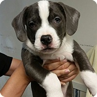 Adopt A Pet :: Van ~ Adoption Pending - Youngstown, OH