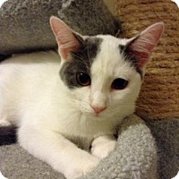 Adopt A Pet :: Ezri - Fitchburg, WI