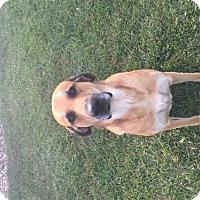 Adopt A Pet :: Bella - Ruma, IL