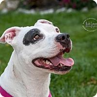 Adopt A Pet :: Petunia - Buffalo, NY