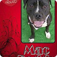 Adopt A Pet :: Mac Daddy - Van Nuys, CA