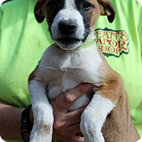 Adopt A Pet :: Audie - Naugatuck, CT