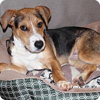 Adopt A Pet :: Henry - Atlanta, GA