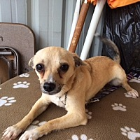 Adopt A Pet :: LYNUS - Elk Grove, CA