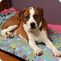 Adopt A Pet :: Dinky - Lisbon, OH