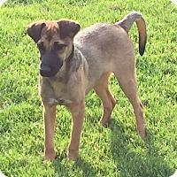 Adopt A Pet :: Calypso - Joliet, IL