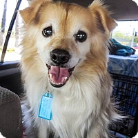 Adopt A Pet :: Cody - Gilbert, AZ