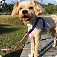 Adopt A Pet :: Harry - New Port Richey, FL