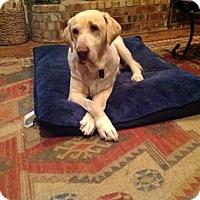 Adopt A Pet :: Solstice - Denton, TX