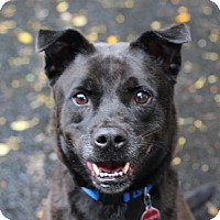 Adopt A Pet :: Bobby - Port Washington, NY