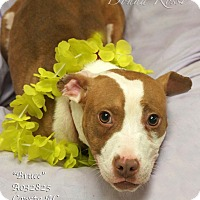 Adopt A Pet :: Bruce - Newnan City, GA