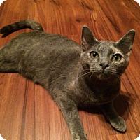 Adopt A Pet :: Kensi - Wilmore, KY