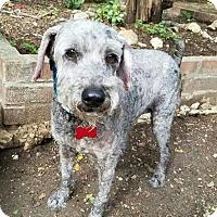 Adopt A Pet :: Spencer - San Antonio, TX