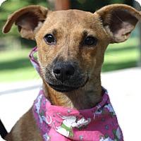 Adopt A Pet :: Carmello - West Grove, PA