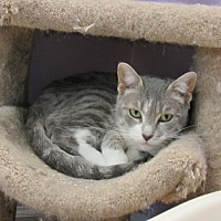 Adopt A Pet :: Alexis - Westbury, NY