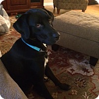 Adopt A Pet :: Lady - Keyport, NJ