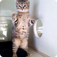 Adopt A Pet :: Peanut - Fairmont, WV