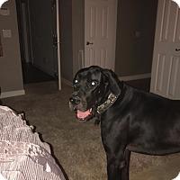 Adopt A Pet :: Brutus - Gallatin, TN