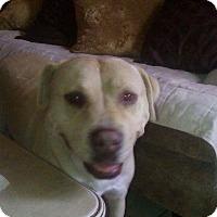 Adopt A Pet :: Romeo - San Diego, CA