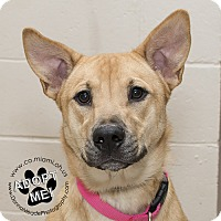 Adopt A Pet :: Sandy - Troy, OH