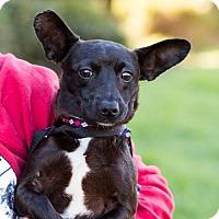 Adopt A Pet :: Cheadle - San Diego, CA