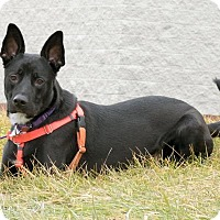 Adopt A Pet :: Ludwig - Np Litter (HP) - Livonia, MI
