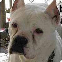 Adopt A Pet :: Beauty - Gainesville, FL