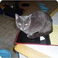 Adopt A Pet :: Amy - Hamburg, NY