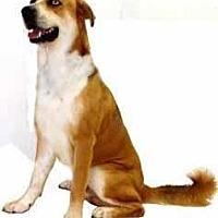 Adopt A Pet :: Juneau - Inverness, FL