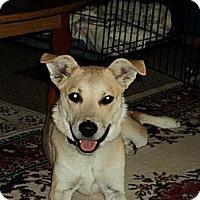 Adopt A Pet :: Sophie - Parsons, TN