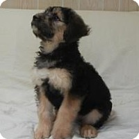 Adopt A Pet :: Elsa - Antioch, IL