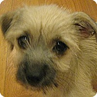 Adopt A Pet :: Sally - Kingwood, TX