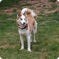 Adopt A Pet :: Skipper - Seymour, CT