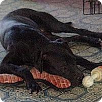 Adopt A Pet :: Val - Only $25 adoption! - Litchfield Park, AZ