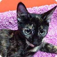 Adopt A Pet :: Lizzy - Topeka, KS