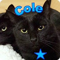 Adopt A Pet :: Cole - brewerton, NY