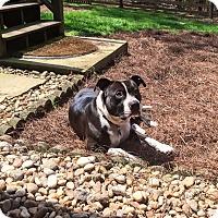 Adopt A Pet :: Marcus - Alpharetta, GA