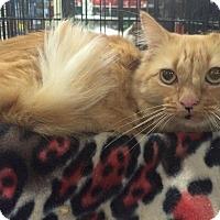 Adopt A Pet :: Mitzi - Harrisburg, NC