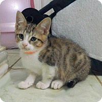 Adopt A Pet :: Demetrius - The Colony, TX