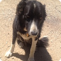 Adopt A Pet :: BELLA (Courtesy List) - San Pedro, CA
