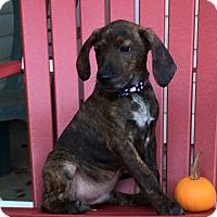 Adopt A Pet :: Purple Boy - Zanesville, OH