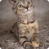 Adopt A Pet :: Starburst - Plymouth, MN